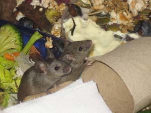 mouse control dublin
