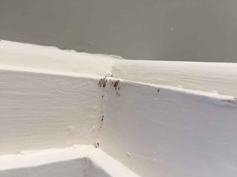 Bird Mites Pest Control - Effective Pest Control