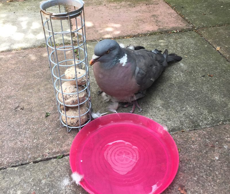 We love animals – look at this pigeon we rescued